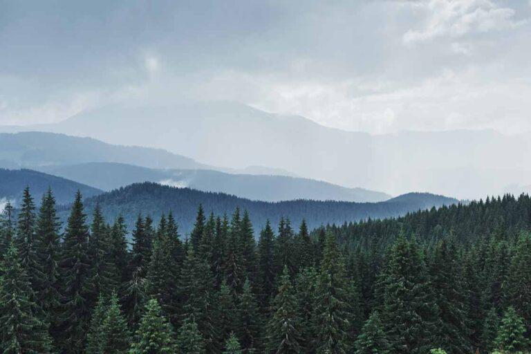 20 minuni ale naturii pe care le vei descoperi în Poiana Brașov