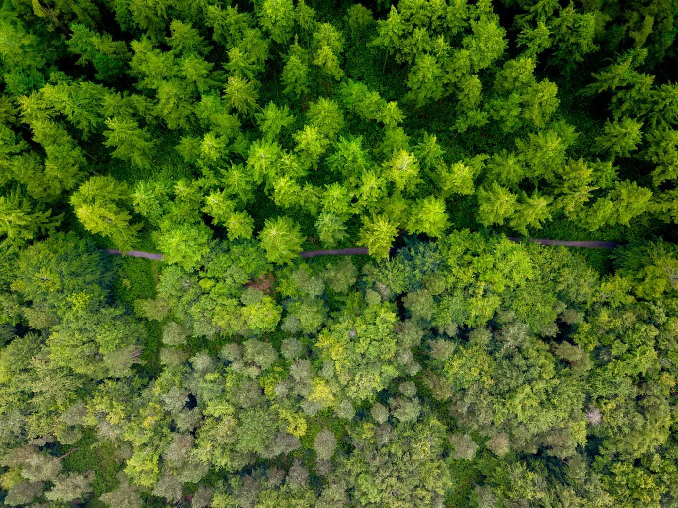 7 tipuri de copaci pe care îi poți vedea în Poiana Brasov